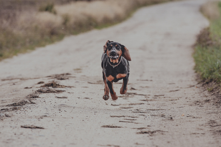 Running black dog, outdoor Stock Photo