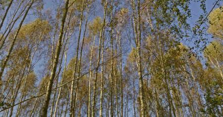 Autumn forest - around view