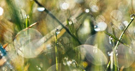 Blurred spring grass with water drops. 4k shot. 版權商用圖片