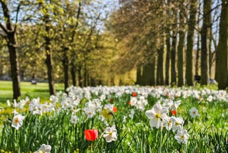 bloomy: Bloomy lawn in spring