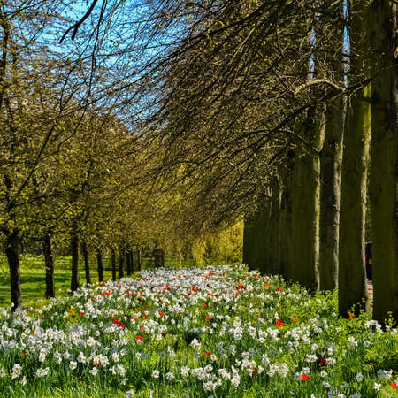 bloomy: Bloomy meadow in spring