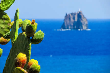 Prickly pears in the island of Stromboli