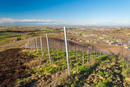 vineyard plain: Vineyards in the hills of Oltrepo Pavese in late autumn