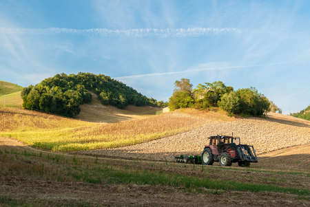 agriculture machinery: A tractor in a hill cornfield in the italian region of Marche Stock Photo