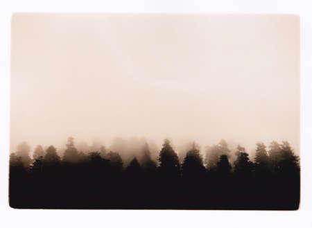 redwood fog