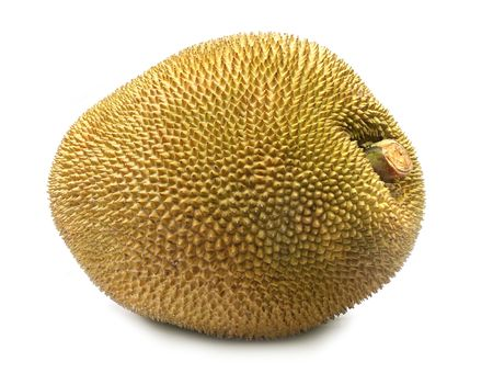 subcontinent: Giant Jackfruit of Indian subcontinent