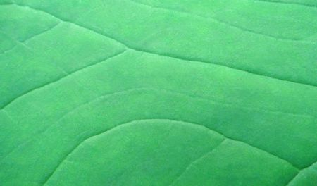 Green leaf closeup Stock Photo - 7729178