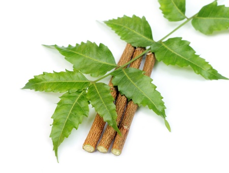 neem: Neem leaves and twigs Stock Photo
