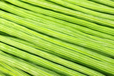 oleifera: Cerca de Moringa Oleifera o sonjna del subcontinente indio