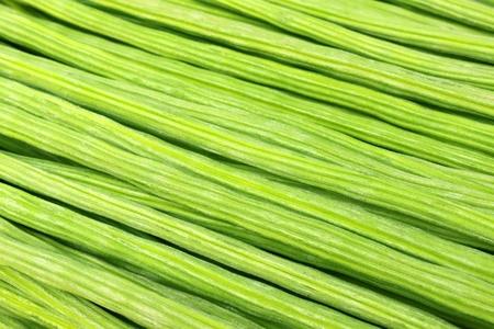 Close up of Moringa Oleifera or sonjna of Indian subcontinent photo