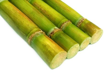 sugar cane farm: Sugar cane over white background