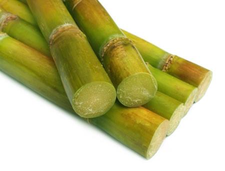 sugar cane farm: Close up of sugar cane over white background
