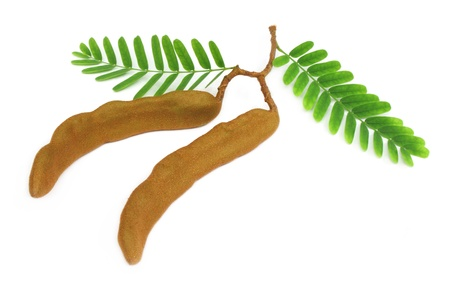 Tamarinds with green leaves