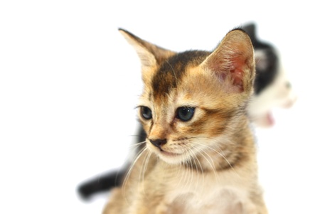 Two baby cats with selective focus over white background