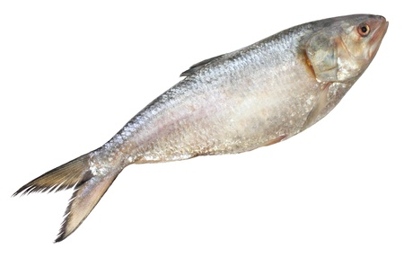 Ilish fish of Southeast Asia Stock Photo - 10786697