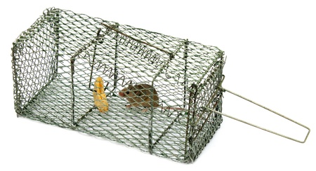 Mouse trap Stock Photo - 11506457