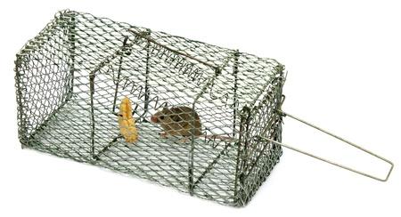 piege souris: Pi�ge � souris Banque d'images