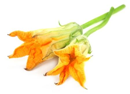 zapallitos: Flor de calabaza comestible sobre fondo blanco Foto de archivo