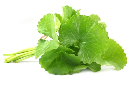 Medicinal Thankuni leaves photo