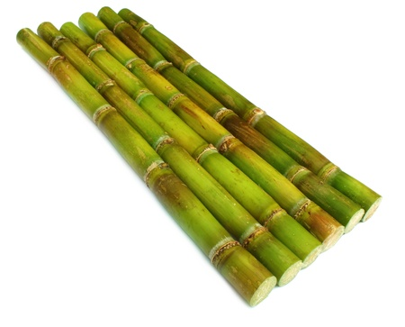 Fresh sugar cane over white background photo
