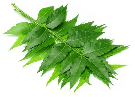 neem: Medicinal neem leaves