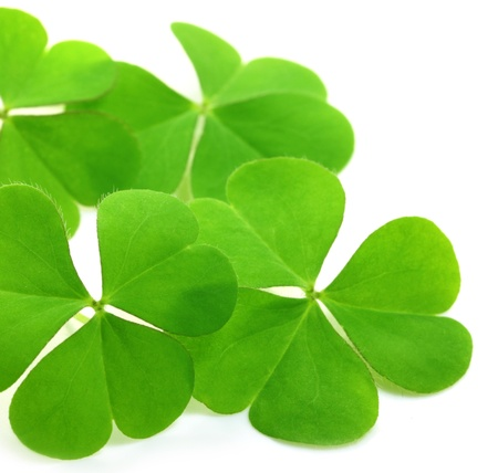 Decorative clover leaves photo
