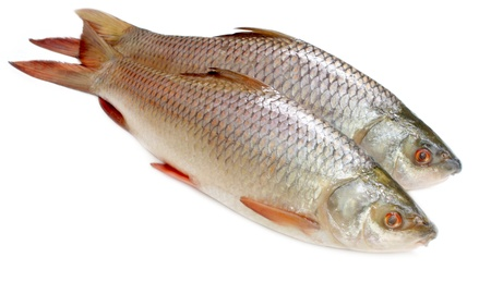 Popular Rohu or Rohit fish of Indian subcontinent photo