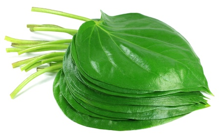 areca: Popular edible betel leaf of Indian subcontinent