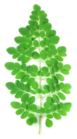 ben oil: Edible moringa leaves