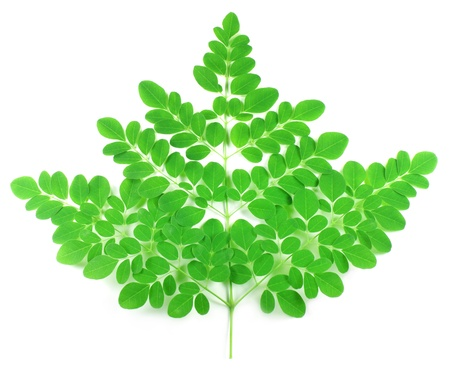 edible leaves: Edible moringa leaves over white background Stock Photo