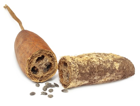 dried gourd: Natural Scrubber of dried ridge gourd Stock Photo