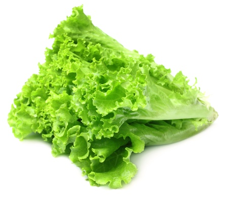 Fresh lettuce Stock Photo - 17194435