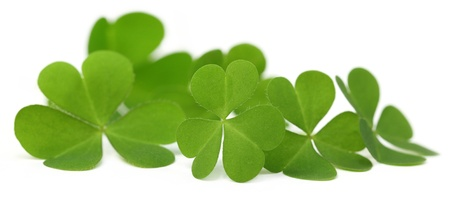 four objects: Decorative clover leaves over white background