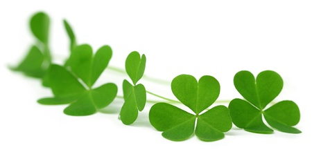 festal: Shamrock Stock Photo