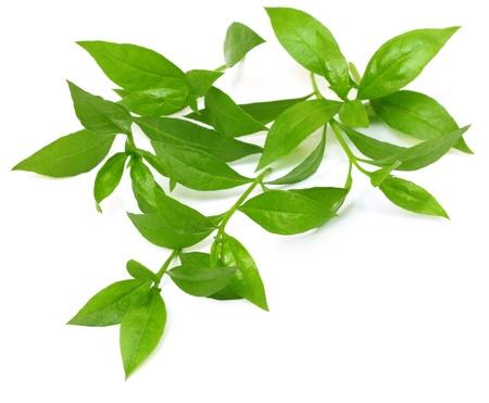 Henna leaves over white background