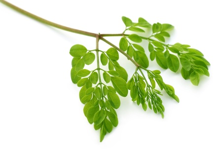Edible moringa leaves over white background photo