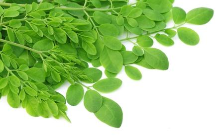 hojas de arbol: Edible moringa hojas sobre fondo blanco
