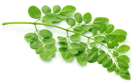 Edible moringa leaves over white background Stock Photo - 17832739