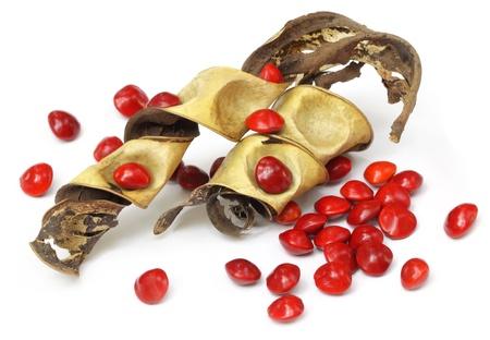 sandalwood: Sandalwood Seeds with dried bean