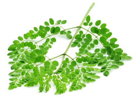 mlonge: Edible moringa lascia su sfondo bianco