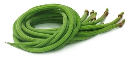 oleifera: Moringa oleifera o sonjna del subcontinente indio