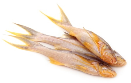 subcontinent: Topse fish of Indian subcontinent
