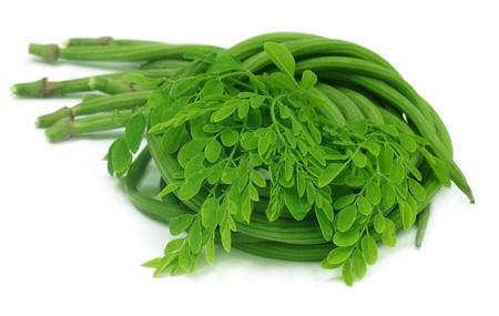 oleifera: Moringa Oleifera or sonjna with fresh leaves