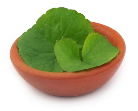 Medicinal thankuni leaves on a clay pot photo