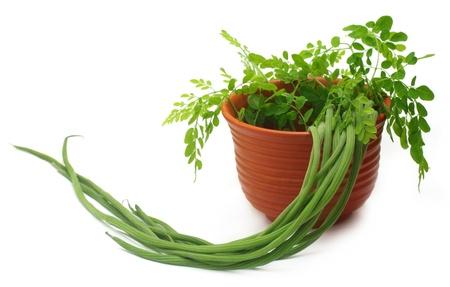 Edible moringa and leaves on a clay pot Stock Photo - 19370973