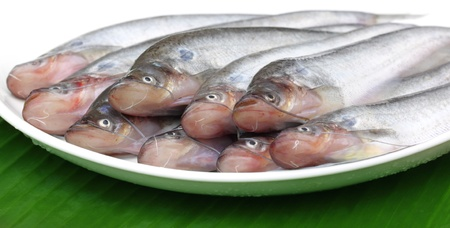 Fresh water Pabda fish of Southeast Asia photo