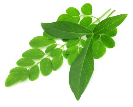 Medicinal vitex negundo  with moringa leaves photo