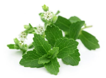 Stevia  photo