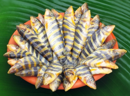 Botia Dario or Rani Fish of Indian subcontinent  Stock Photo - 22006121
