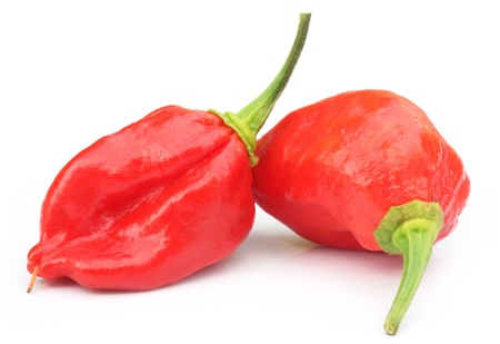 dorset: Bhut Jolokia chili pepper or the Naga Morich of Bangladesh Stock Photo